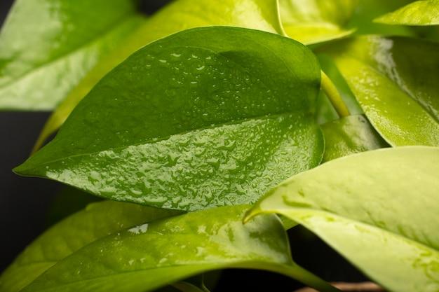Detalles de texturas de plantas de interior