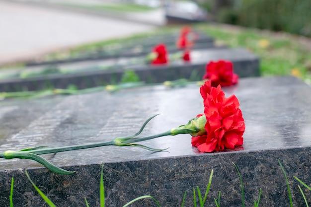 Día conmemorativo. primer plano de clavel en una placa conmemorativa.