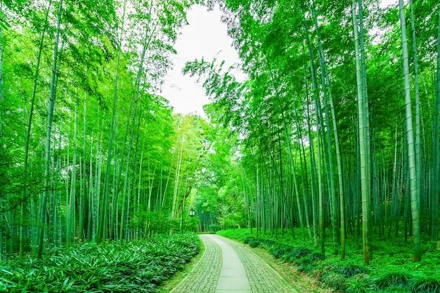 Día de crecimiento de china de naturaleza de bosque