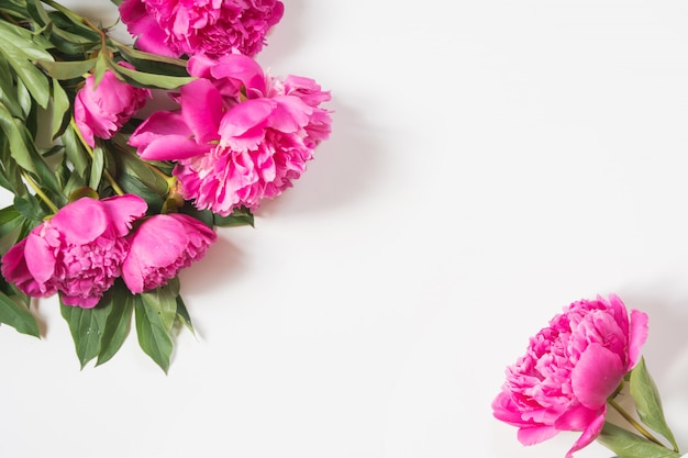 Día de la madre. flores de peonía rosa sobre blanco.