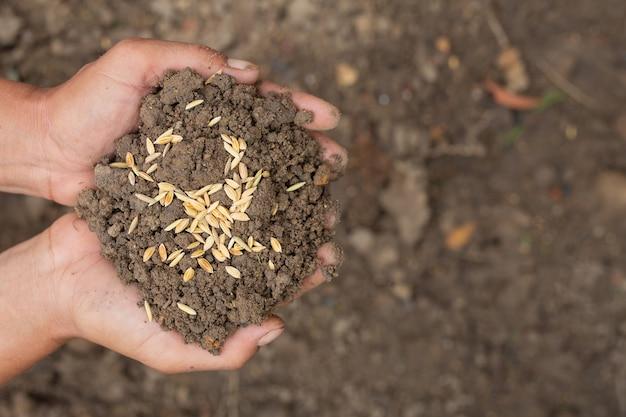 El día mundial de la alimentación, la mano de un hombre abraza la tierra con semillas de arroz en la parte superior.