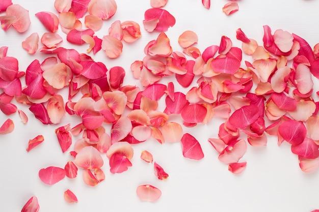 Día de san valentín. pétalos de flores color de rosa sobre fondo blanco. fondo del día de san valentín. endecha plana, vista superior, espacio de copia.