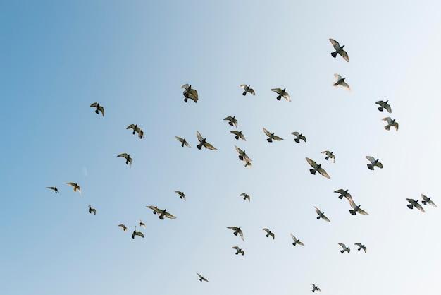 Día soleado, pájaros voladores