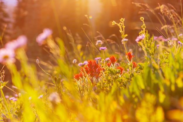 Día soleado en el prado de flores. hermoso natural.