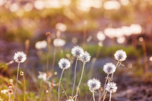 Día soleado en el prado de flores.