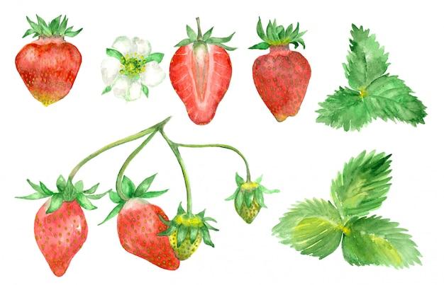 Dibujado a mano acuarela fresa