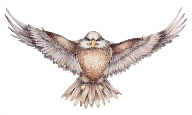 Dibujado a mano águila voladora