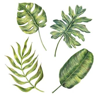 Dibujado a mano hojas de palma monstera, plátano y areca