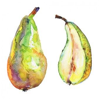 Dibujado a mano peras verdes. fruta fresca acuarela aislada
