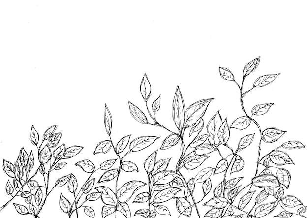 Dibujo a mano de hojas y rama con tinta negra, en la parte inferior sobre papel blanco