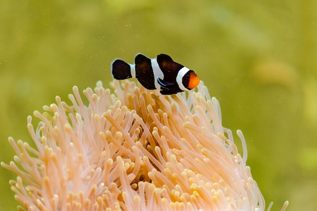Dibujos animados de peces y coral