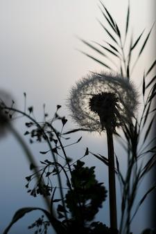 Diente de león y hierba sobre un fondo de cielo azul