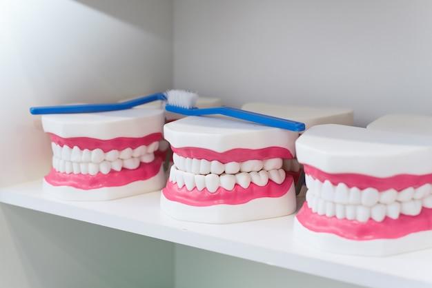 Dientes de juguete para niños. implantes no reales, mandíbula para el desarrollo de la higiene.