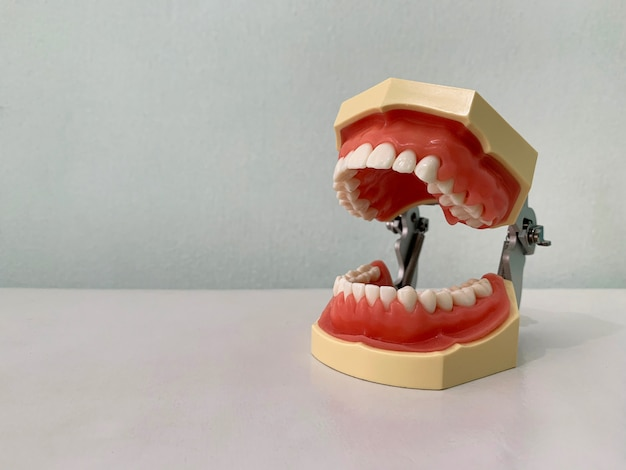 Dientes y modelo de mandíbula en mesa blanca en la clínica de dentista.