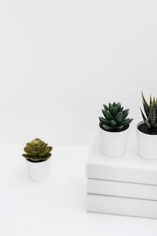 Diferente planta de cactus en maceta con apilados de libros sobre fondo blanco