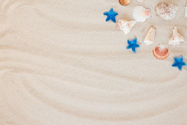 Diferentes conchas de mar en la arena