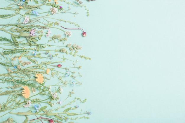 Diferentes flores silvestres sobre papel