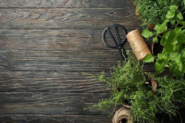 Diferentes hierbas sobre fondo de madera, espacio para texto