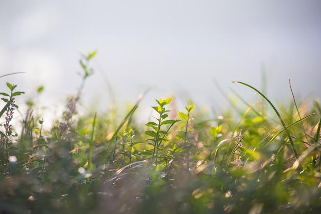 Diferentes hiervas