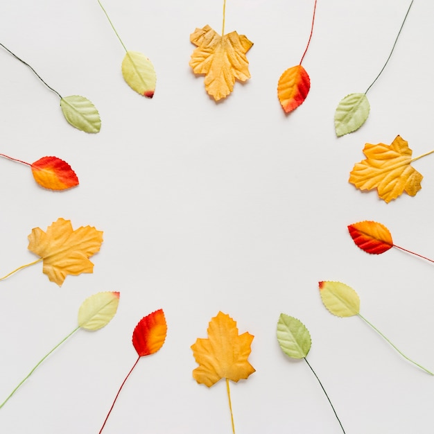 Diferentes hojas decorativas en circulo sobre superficie blanca.