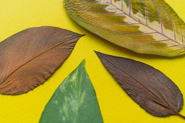Las diferentes hojas planas laicos textura macro, concepto de otoño de la naturaleza