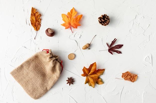 Diferentes hojas sobre fondo blanco.