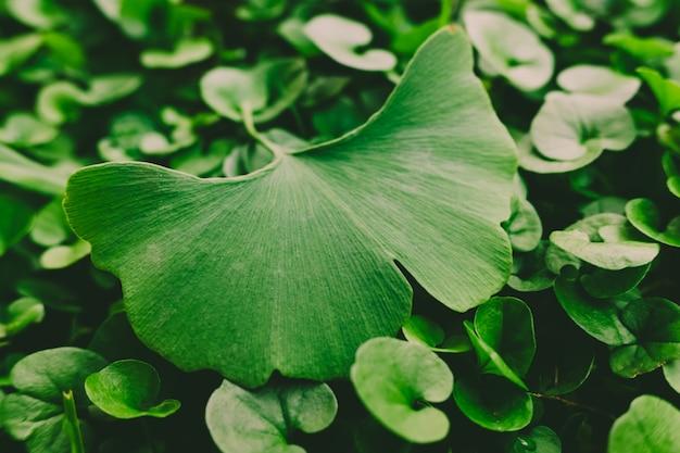 Diferentes hojas en el suelo