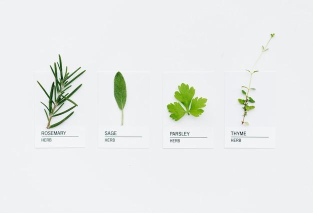 Diferentes tipos de hierbas.
