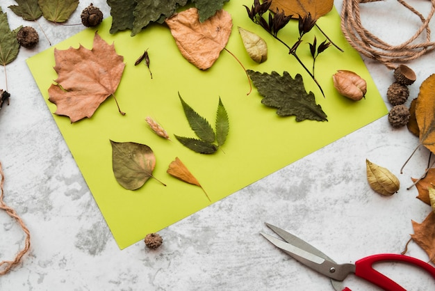 Diferentes tipos de hojas de otoño secas en papel de menta verde sobre fondo texturizado