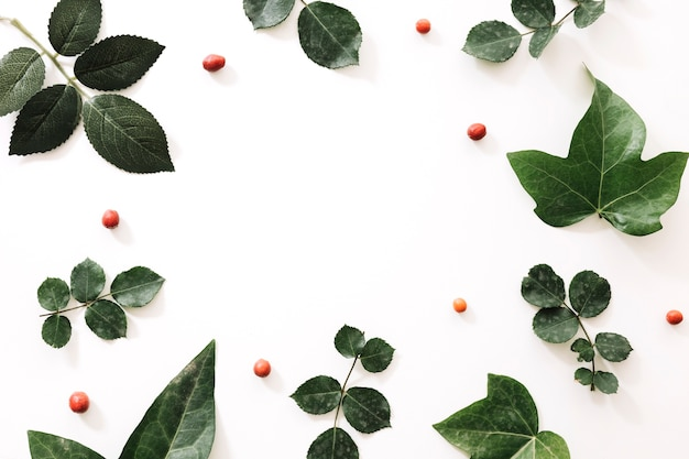 Diferentes tipos de hojas tropicales y frutas de baya en el fondo blanco