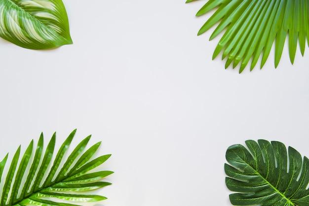 Diferentes tipos de hojas verdes en la esquina del fondo blanco.