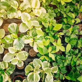 Diferentes tipos de plántulas en planta en maceta