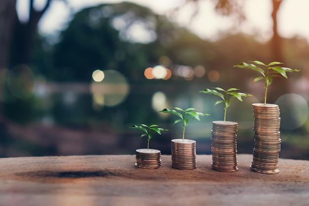 Dinero, planta en la pila de monedas concepto cada vez mayor y el éxito de los objetivos financieros.
