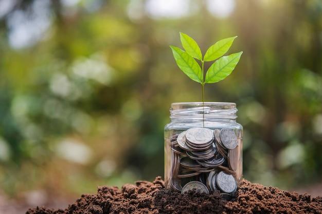 Dinero en vidrio con crecimiento de plantas en suelo. concepto de finanzas y contabilidad