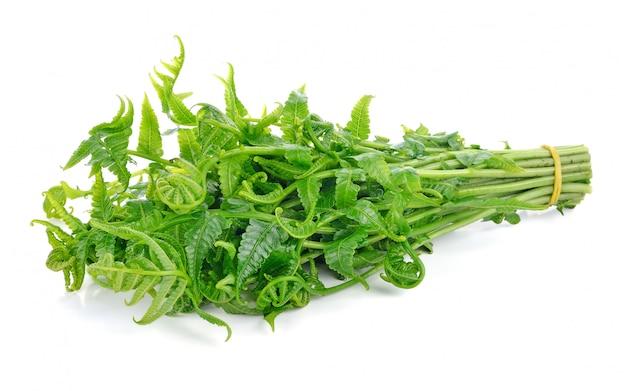 Diplazium esculentum o helecho vegetal comestible encontrado en asia y oceanía