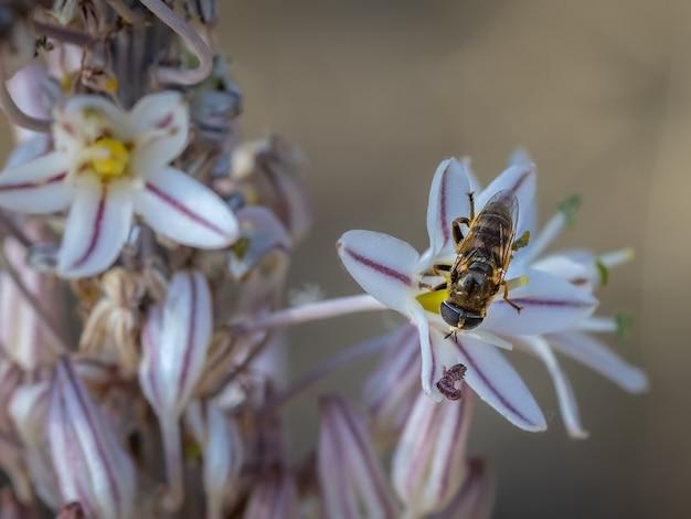 Diptero. especies de moscas fotografiadas en su entorno natural.