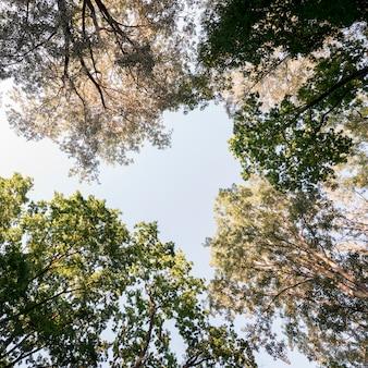 Directamente debajo de la rama de un árbol en el jardín.