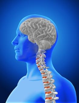 Diseño de cerebro y columna vertebral