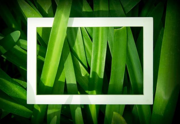 Diseño creativo hecho de hojas con marco blanco. vista superior. concepto de la naturaleza