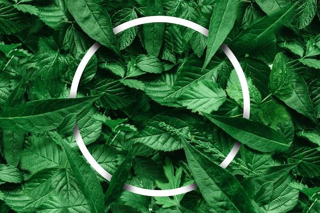 Diseño creativo de hojas con un borde de papel.