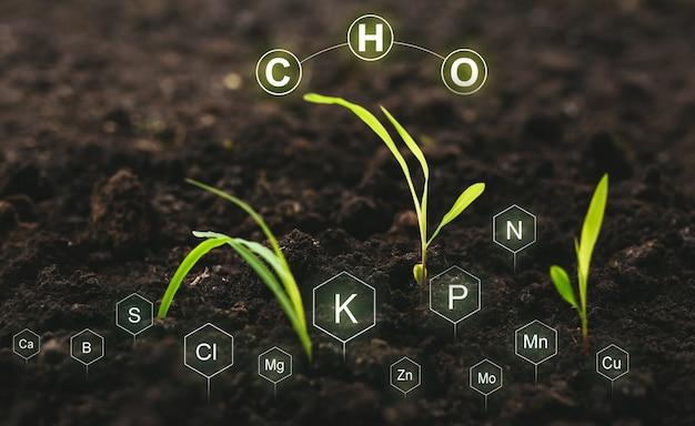 Diseño digital de fertilización y el papel de los nutrientes en una planta en el suelo.