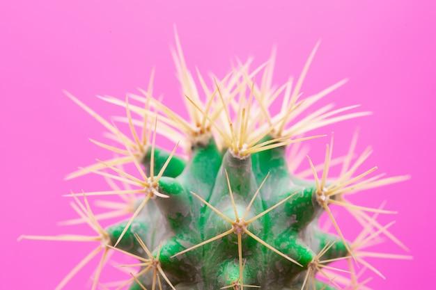 Diseño de moda de cactus