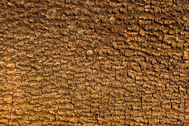 Diseño de textura de corteza de árbol sin costuras