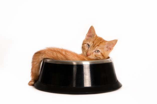 Disparo aislado de un gato jengibre mirando el frente acostado dentro de un plato de comida para mascotas