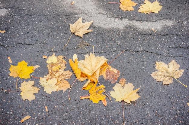 Disparo de alto ángulo de otoño amarillo laves sobre suelo de hormigón