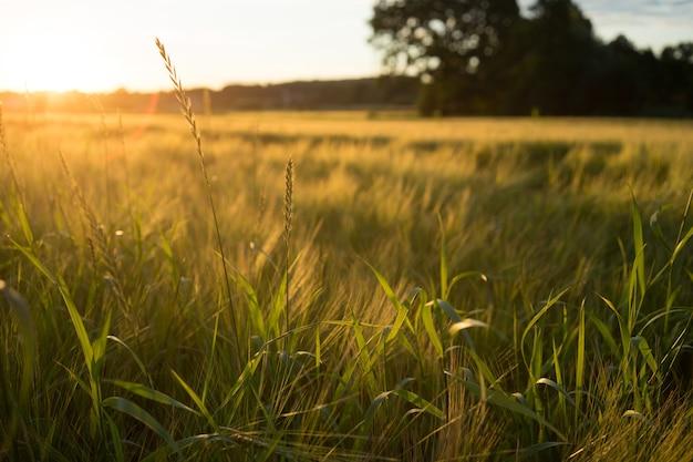 Disparo de alto ángulo de un prado cubierto de hierba durante una puesta de sol