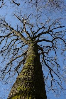 Disparo de ángulo bajo vertical de un tronco de árbol cubierto de musgo bajo el cielo azul claro