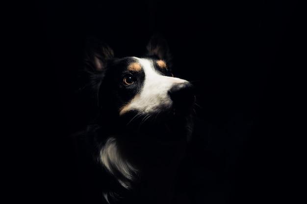 Disparo artístico de un perro de compañía en la oscuridad mirando a la luz