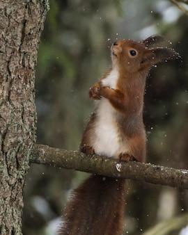 Disparo de closuep vertical de una linda ardilla sentada en la rama de un árbol con un fondo borroso
