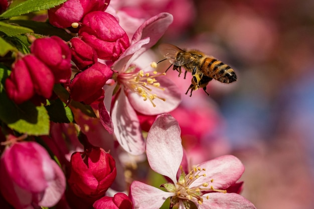 Disparo de enfoque selectivo de una abeja volando por